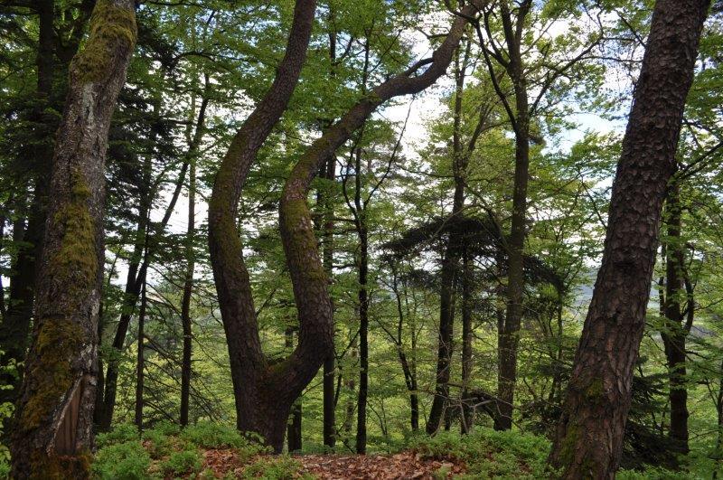 18.04.26.060.dans la forêt
